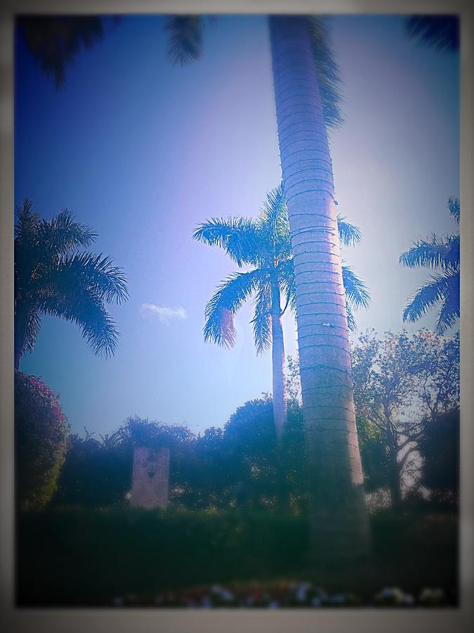 Palm Photograph - Palm Trees by Jack Jodoin-Siegel