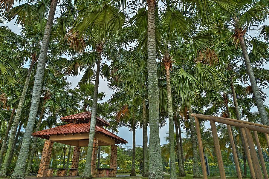 Landscape Photograph - Palm Trees by Mario Legaspi