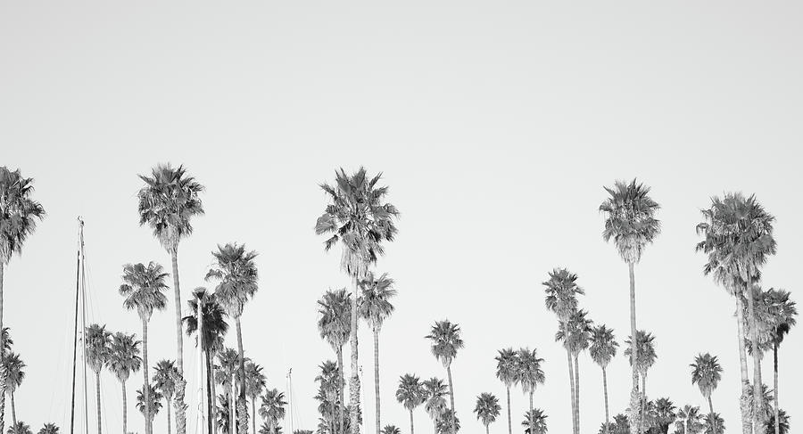 Palm Trees Photograph by Tokenphoto