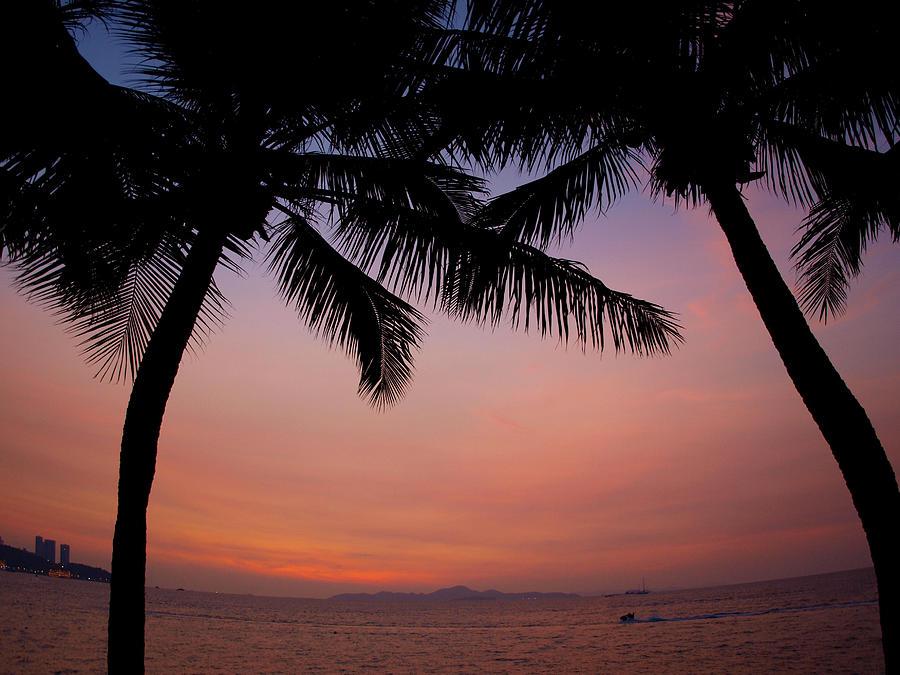 Palms Pyrography - Palms by Alina Satir