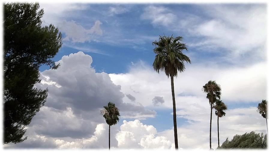 Blue Sky Photograph - Palms And Clouds by Glenn McCarthy Art and Photography
