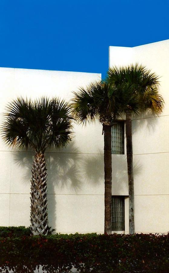 Palm Tree Pyrography - Palms by Bruce Lennon