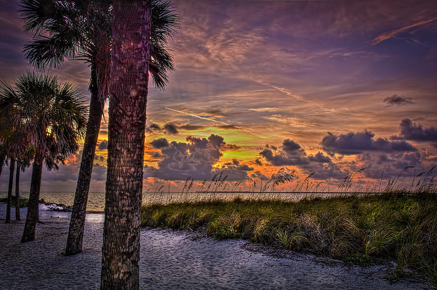 Palm Trees Photograph - Palms Down To The Beach by Marvin Spates