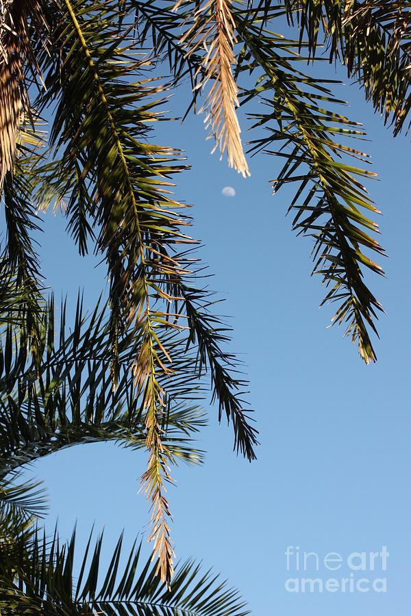 Palms Photograph - Palms In The Wind by AR Annahita