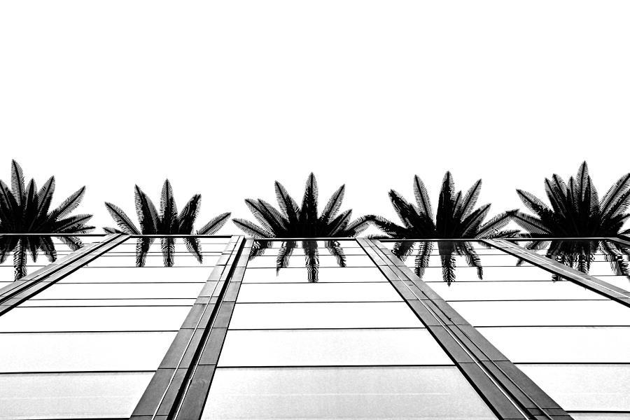 Palms Photograph - Palms by Tammy Espino