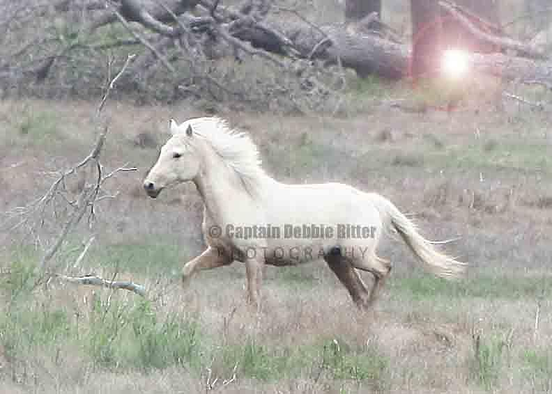 Wild Horse Photograph - Palomino Dream by Captain Debbie Ritter