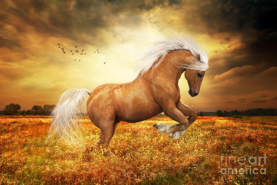 Palomino Horse Sundance  by Shanina Conway
