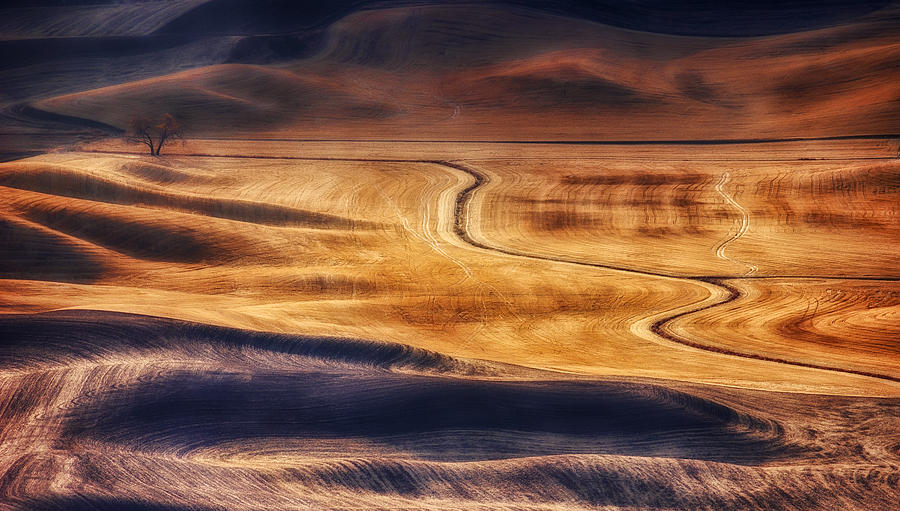 Palouse Photograph - Palouse Curves by Ray Still