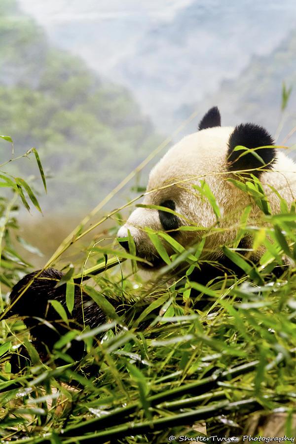 Panda Photograph by Shuttertwinz Photography Llc