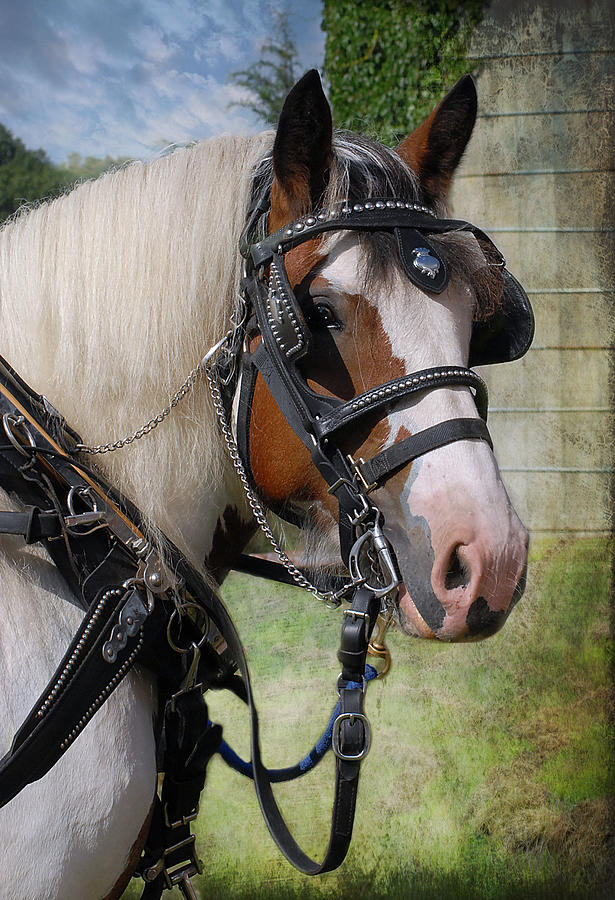 Heavy Harness Photograph - Pandora In Harness by Fran J Scott