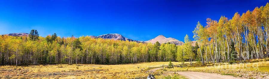 Autumn Photograph - Panorama Autumn Bonanza by James BO  Insogna