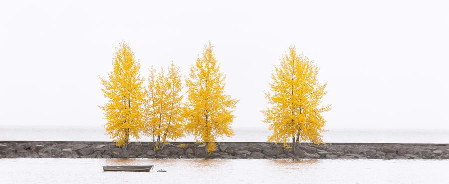 Autumn Photograph - Panorama Tree by U Schade