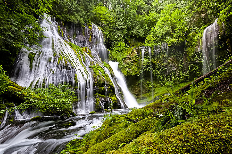 Panther Creek Falls Photograph - Panther Creek Falls by Brian Bonham