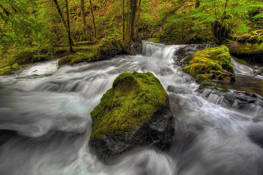 Panther Creek Falls Photograph - Panther Creek Falls by David Gn