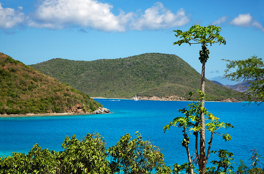Bay Photograph - Papaya Tree Over Leinster Bay by Jo Ann Snover