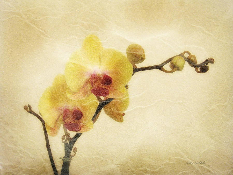 Orchid Photograph - Paper Flowers by Donna Blackhall
