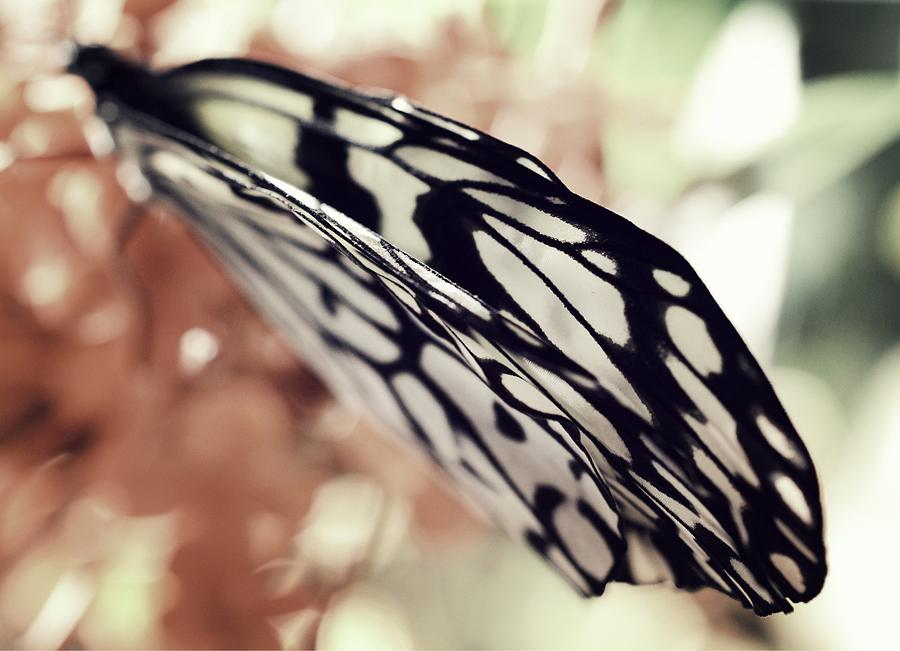 Paper Kite Photograph - Paper Kite Butterfly Wings by Marianna Mills