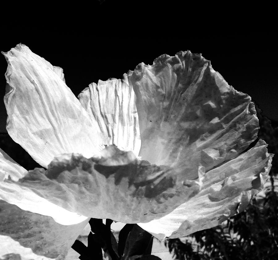 Flora Photograph - Paper Sun  by Natalya Karavay