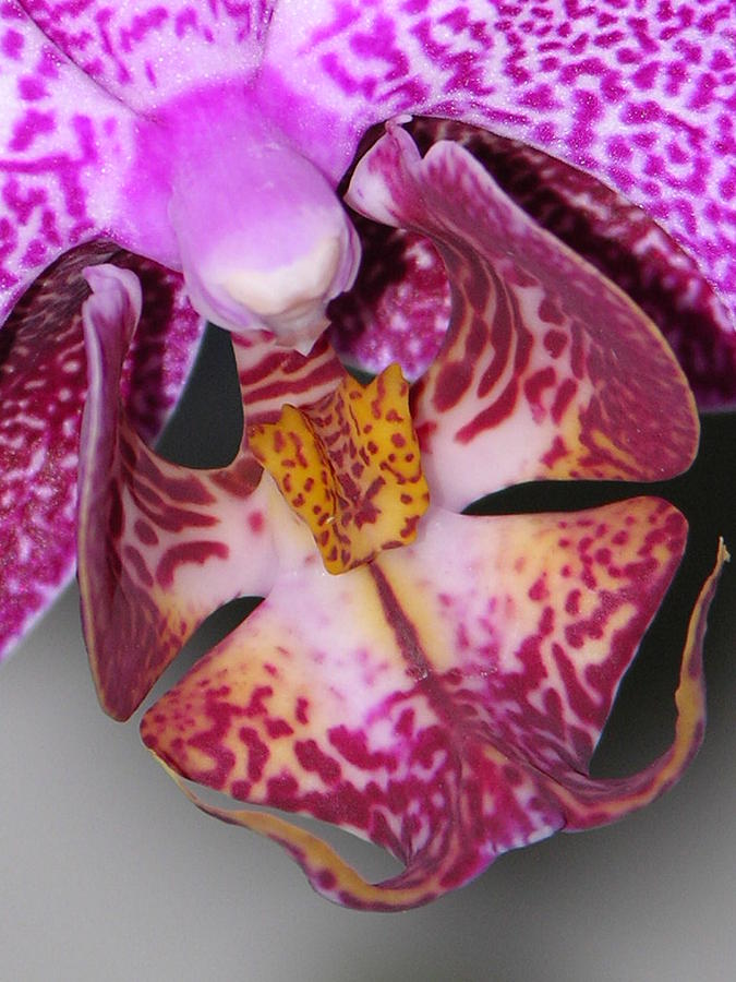Orchid Photograph - Paradise by Lucy Howard