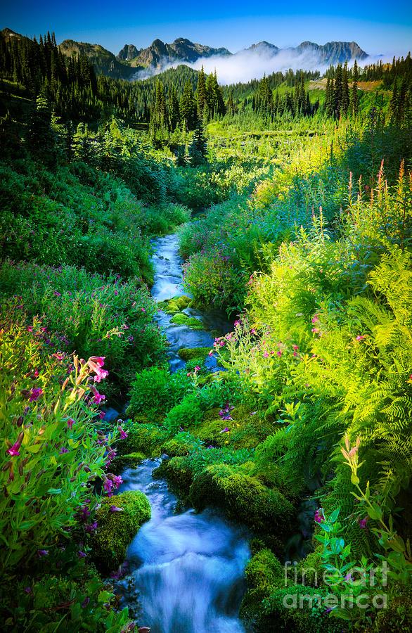America Photograph - Paradise Stream by Inge Johnsson