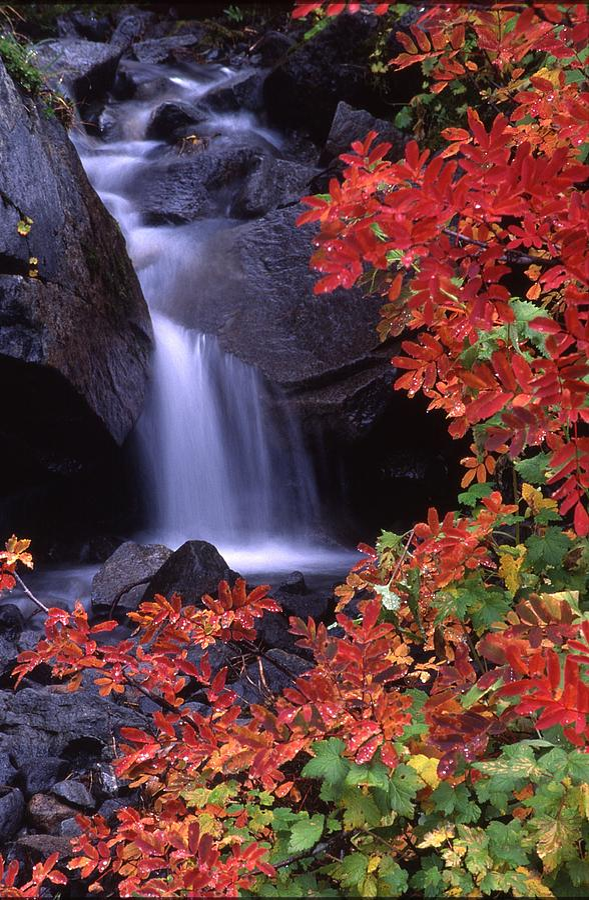 Rainier Photograph - Paradise Valley Stream In Fall by Ken Dietz