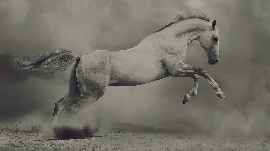Horse Photograph - Parical by Hamze Dashtrazmi (
