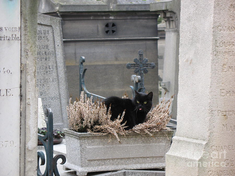 Paris Cemetery Cat - Le Chats Noir - Pere Lachaise - Black Cat On Grave Cemetery Art Photograph by Kathy Fornal