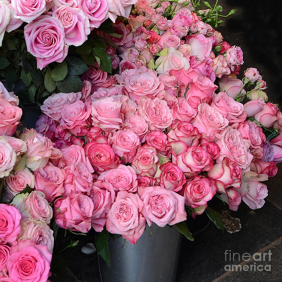 paris french market pink roses paris romantic pink. Black Bedroom Furniture Sets. Home Design Ideas