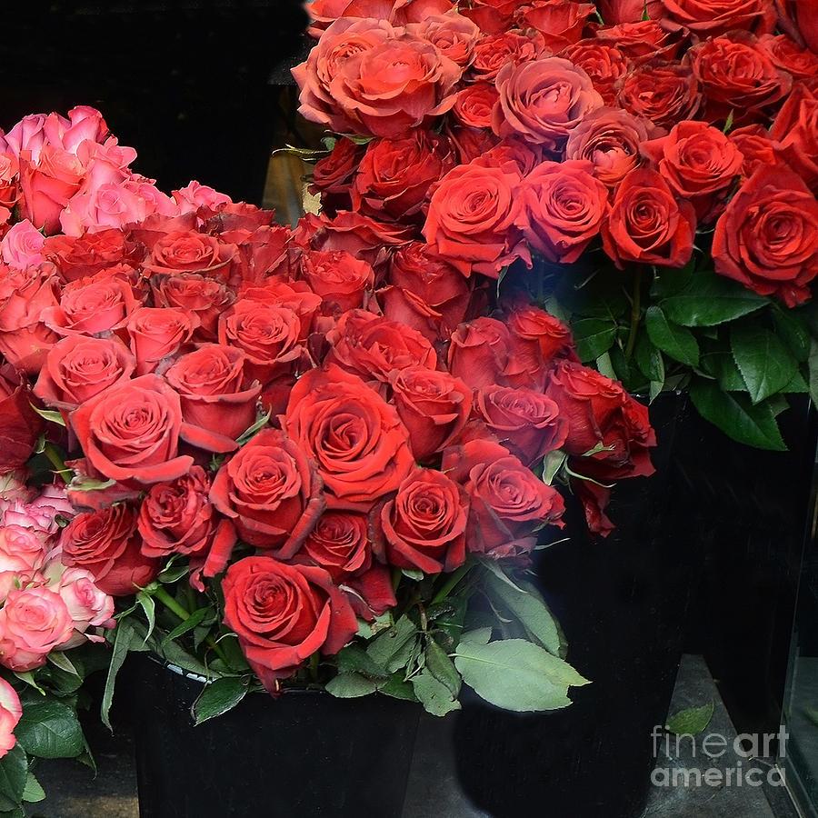 Paris France Photograph - Paris Red French Market Roses - Paris French Flower Market Red Roses  by Kathy Fornal