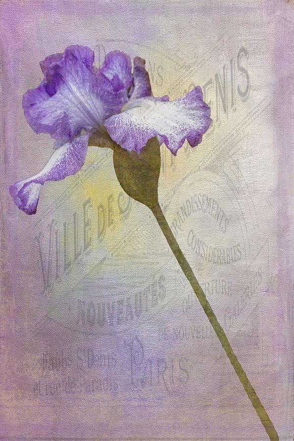 Flora Photograph - Parisian Purple by Chanin Green