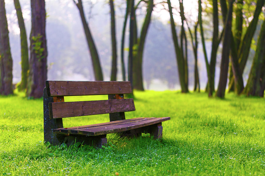 Nobody Photograph - Park Bench And Green Grass by Wladimir Bulgar
