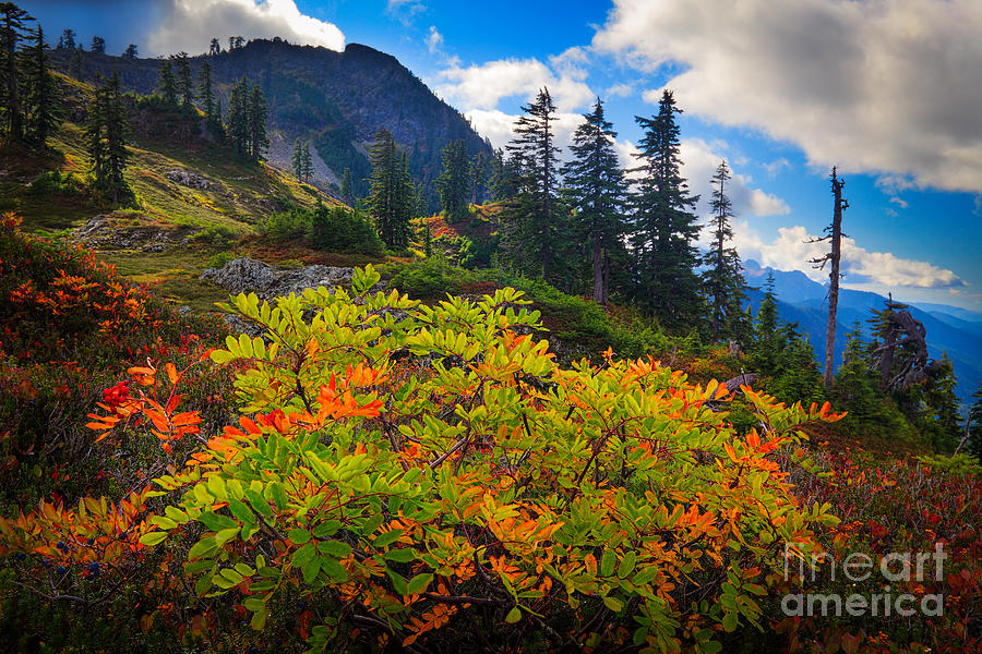 America Photograph - Park Butte Fall Color by Inge Johnsson