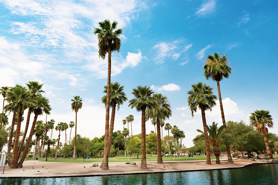 Park In Phoenix - Arizona Photograph by Franckreporter