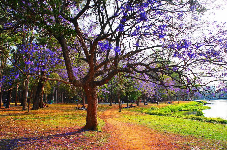 Parque Do Ibirapuera Photograph by Nido Huebl