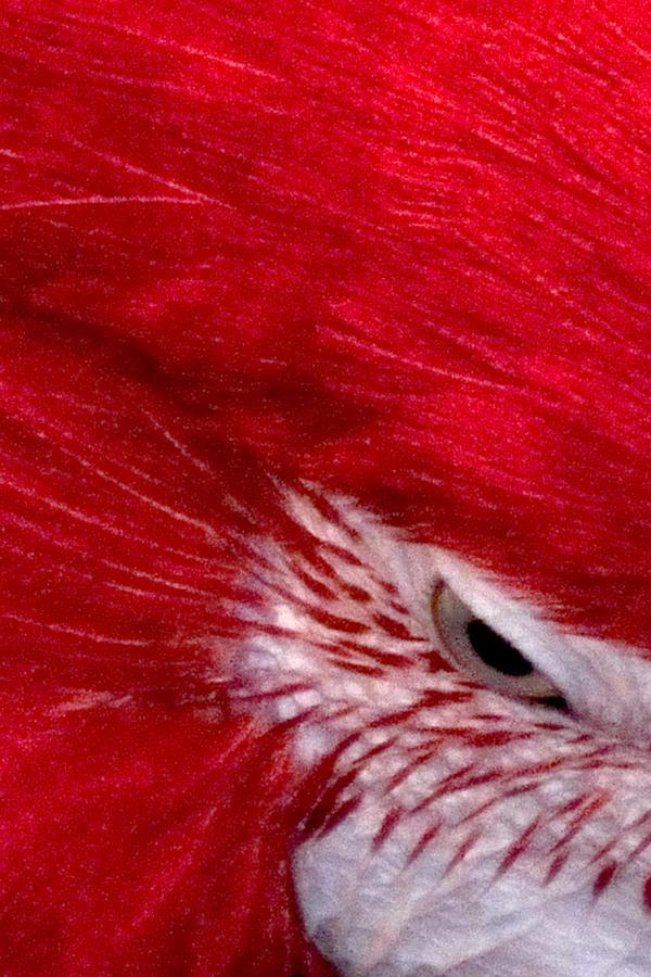 Parrot 13677 Photograph