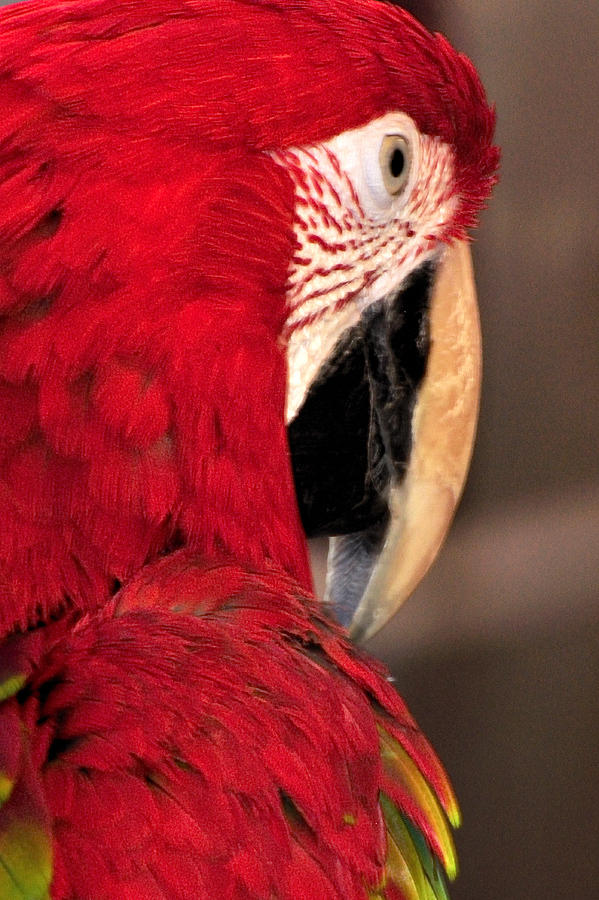 Parrot 13680 Photograph