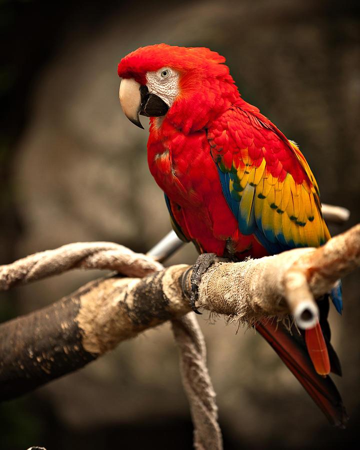 Zoo Photograph - Parrot by Kerri Garrison