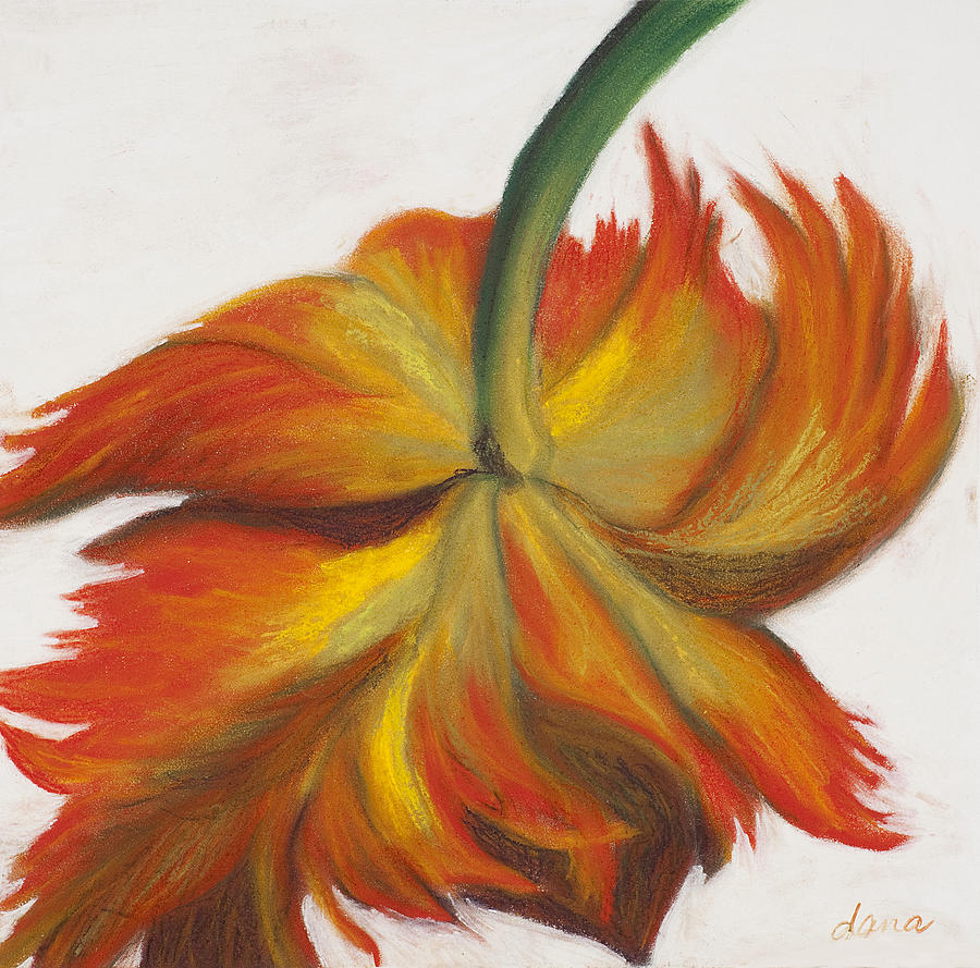 Tulip Painting - Parrot Tulip by Dana Strotheide