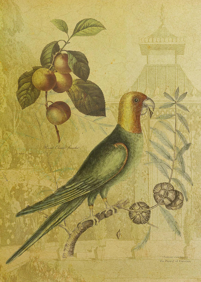 Parrot Digital Art - Parrot With Plums by Sarah Vernon