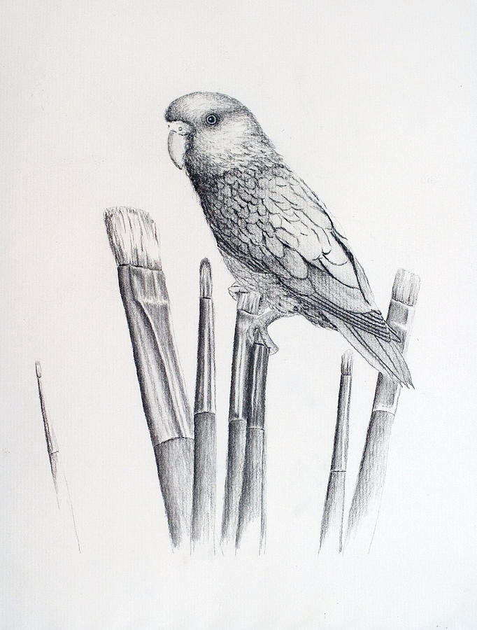 paint brushes drawing. parrot drawing - parrotlet on paintbrushes by gloria hopkins paint brushes
