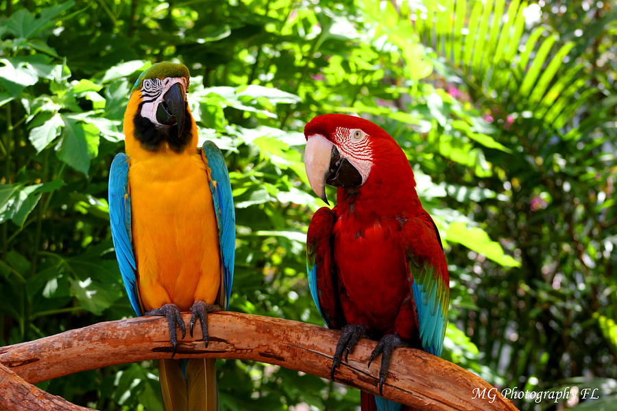 Parrot's Photograph - Parrots Perch by Marty Gayler