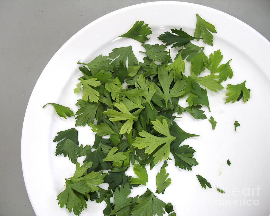 Parsley on a Plate by Gerald Grow