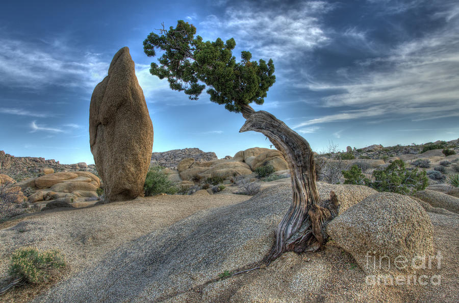 Lone Pine Photograph - Partners by Bob Christopher