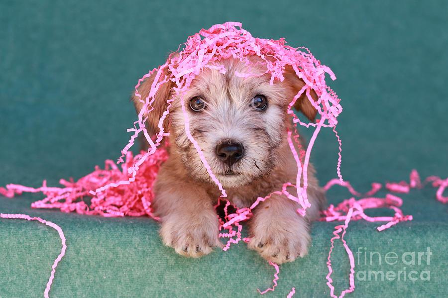 Puppy Photograph - Party Animal by Brenda Schwartz