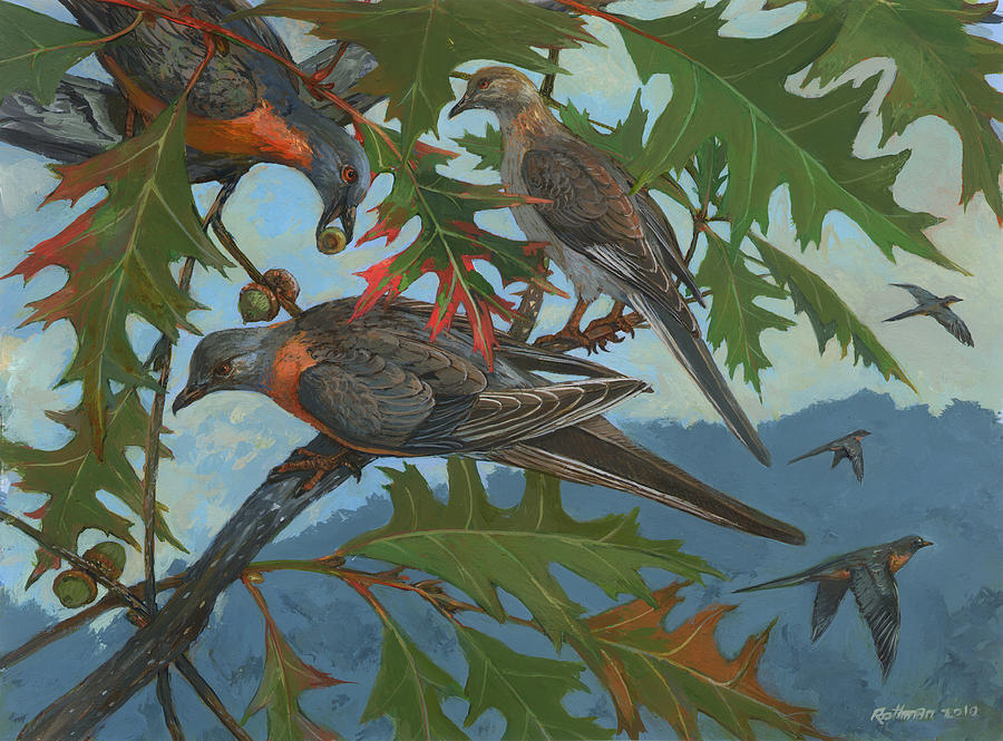 Wildlife Painting - Passenger Pigeon by ACE Coinage painting by Michael Rothman