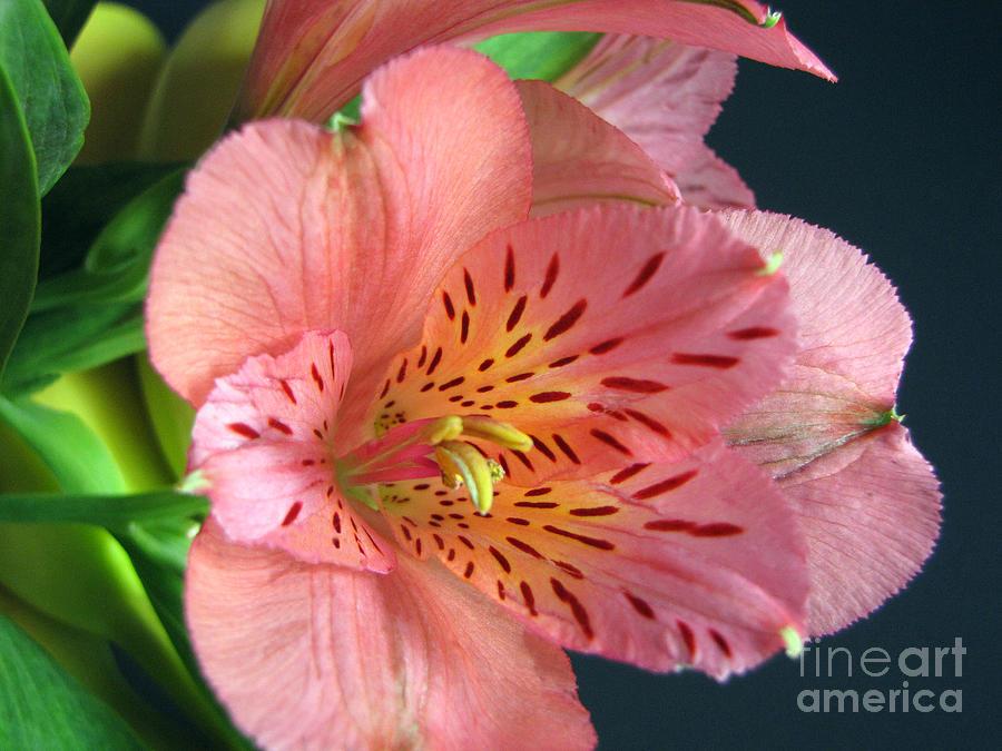 Wild Flowers Photograph - Passion 1 by Cedric Hampton