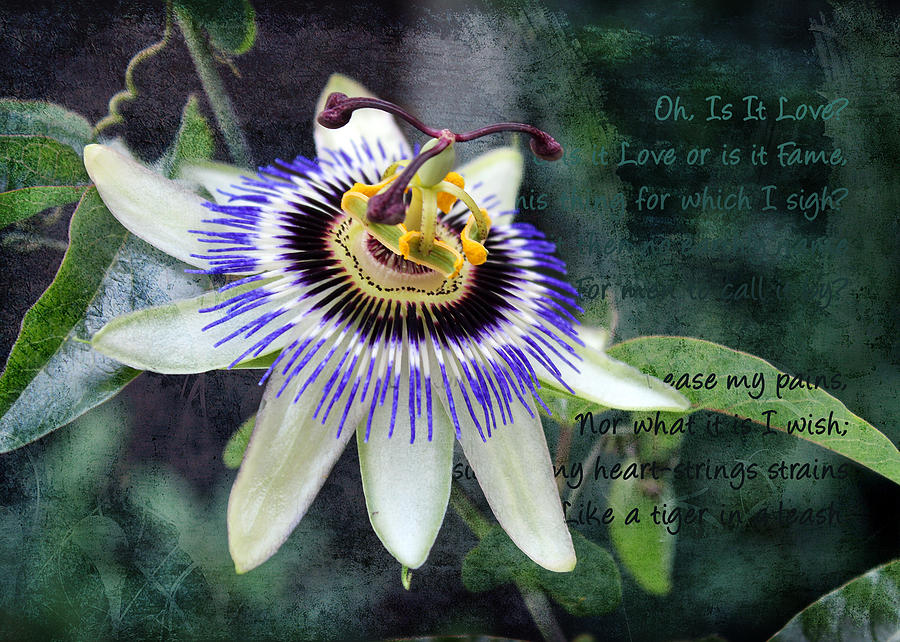 Passion Flower 1 by Helene U Taylor