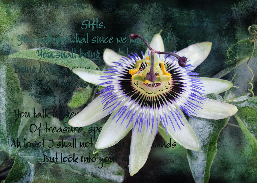 Passion Flower 2 by Helene U Taylor