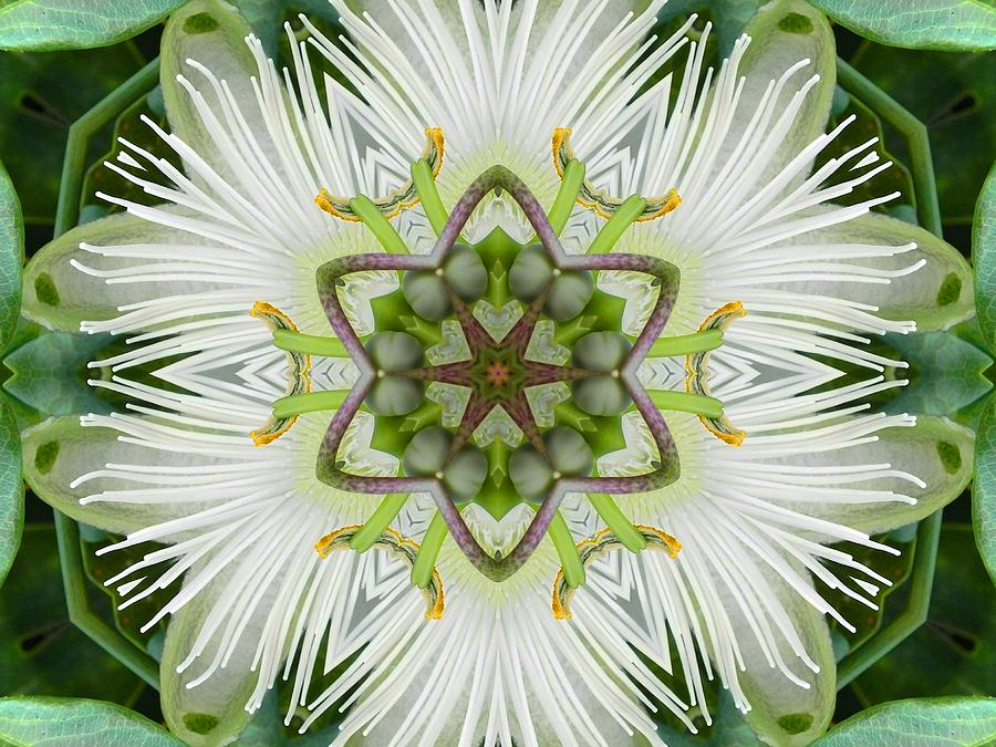 Passion Flower Mandala by Diane Lynn Hix