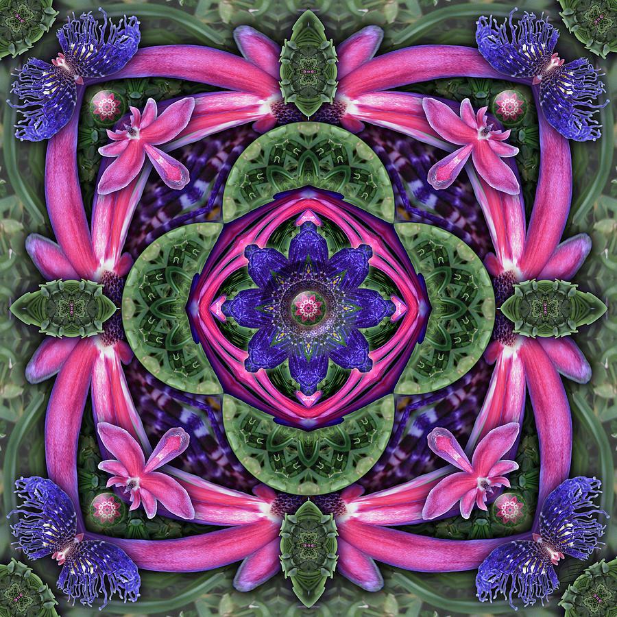 Kaleidoscope Photograph - Passion On Grass by Karen Hochman Brown